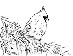 Cardinal Coloring Page And