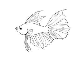 Betta Fish Coloring Pages 259