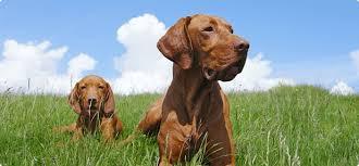 Wel e to PuppyFinder The Puppy Search Engine