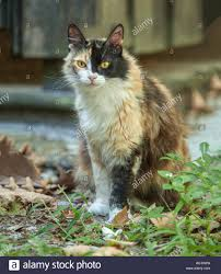 Calico Barn Cat Sitting In Grass And Leaves Stock Photo, Royalty ... Ferals Strays And Barn Cats Cat Tales Tuesdays Fun And Aww My Moms Is Gorgeous Viralspell The Care Feeding Of Timber Creek Farm Program Buddies Seeking Support For Its Catsaving Efforts Adoption Barn Cats Near Bardstown Ky Petfinder For Green Rodent Control Turn To Barn Cats The Flying Farmers Free Images Wood Old Animal Cute Wall Pet Rural Sitting On Top Of Bales Straw Ready To Pounce Stock Weve Got Hire Central Missouri Humane Society By Jsf1 On Deviantart