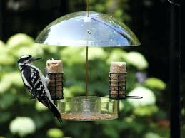 Suet Feeders For Woodpecker Woodpecker Feeders Bird Feeders For