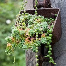 entretien plante grasse d interieur 5 conseils pour entretenir ses plantes grasses le coin potager