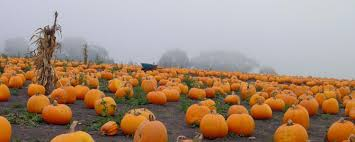 Colorado Pumpkin Patch by Tips For An Affordable Green Halloween Cu Boulder Today
