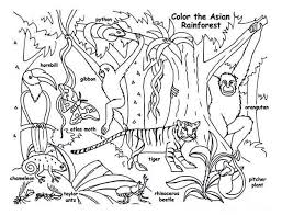 Rainforest Animals Coloring Pages For Kids