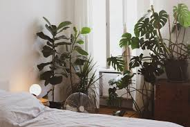 8 schlafzimmerpflanzen die dich besser schlafen lassen