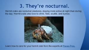 Do Hermit Crabs Shed Their Whole Body by 8 Things You Didn U0027t Know About Hermit Crabs