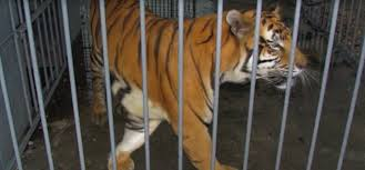 Tony The Tiger Has Been Trapped For 15 Years