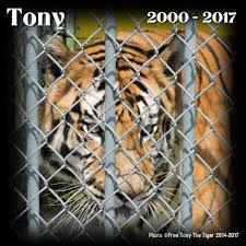 Free Tony The Tiger (@FreeTonyTiger) | Twitter