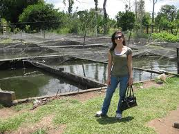 Costa Rica Blogging: Tilapia Farming In Costa Rica Backyard Tilapia Fish Farm August 192011 Update Youtube Fish Farming How To Make It Profitable For Small Families Checking Size Backyard Catfish To Start A Homestead Or Commercial Tilapia In Earthen Pond 2017 Part 1 Preparation And Views Of Wai Opae Tide Pools From Every Roo Vrbo Sustainable Dig Raise Bangkhookers Fishing Thailand An Affordable Arapaima In Your Home Worldwide Aquaponics Garden Table Rmbdesign Guide Building A Growing Farm Sale Farming Pinterest
