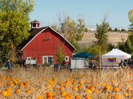 Denver Pumpkin Patch by Pumpkin Festival United States Colorado Littleton Denver