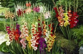 wholesale flower bulbs potplanten buiten schaduw