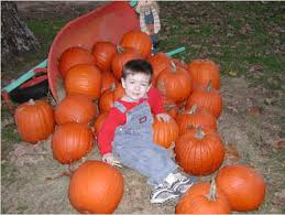 Big Orange Pumpkin Patch Celina Texas by Elves Christmas Tree Farm And Pumpkin Patch One Hour North Of Dallas
