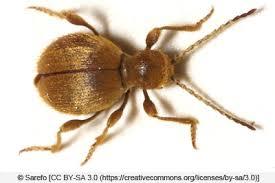 ungeziefer im bad 7 häufige kleine tiere und insekten