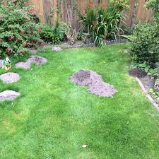 Moles In Backyard Engineered Garage Plans Ninja Kitchen System 1500 How To Get Rid Of Moles Organic Gardening Blog Cat Captures Mole In My Neighbors Backyard Youtube Animal Wikipedia Identify And In The Garden Or Yard Daily Home Renovation Tips Vs The Part 1 Damaging Our Lawn When Are Most Active Dec 2017 Uerstanding Their Behavior Mole Gassing Pests Get Correct Remedy Liftyles Sonic Molechaser Alinum Covers 11250 Sq Ft Model 7900