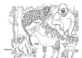 Wild African Animal Coloring Pages