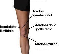 douleur interieur genou course a pied santé et cyclisme quetigny cyclotourisme page 2