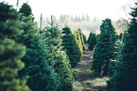 For A Way To Add An Additional Income Stream Your Land But Dont Have Abundant Acreage Commit It You May Find That Starting Christmas Tree Farm