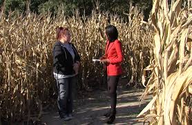 Pumpkin Farms Southern Illinois by Safety First At Corn Mazes Wsil Tv 3 Southern Illinois