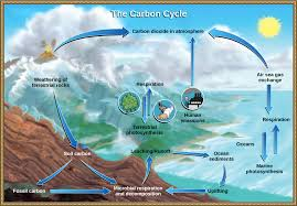 Define The Word Carbon Sink by The Carbon Cycle Article Ecology Khan Academy