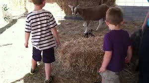 Pumpkin Patch With Petting Zoo by Pumpkin Patch Petting Zoo Youtube