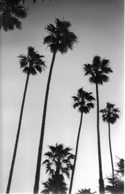 Black And White Palm Trees Tumblr