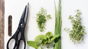 liste mit küchenkräutern diese kräuter dürfen in keiner