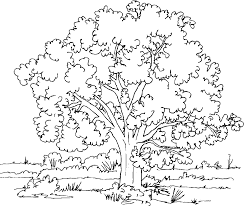 Coloring Pages Tree For Adults