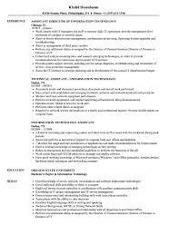Download Information Technology Assistant Resume Sample As Image File