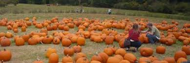 Pumpkin Patch Gainesville Texas by Berry Patch Farms In Woodstock Ga