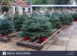 Christmas Trees Vancouver Wa by Christmas Rush Stock Photos U0026 Christmas Rush Stock Images Alamy