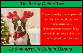 benson animal hospital summerfields animal hospital 196 photos 104 reviews