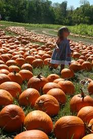 Pumpkin Patch Houston Oil Ranch by Corn Maze And Pumpkin Patch Ideas For Pumpkin Patch Pinterest