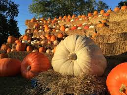 Pumpkin Festival Cleveland Ohio by The 12 Best Pumpkin Patches In Ohio For 2016
