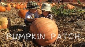Tanaka Farms Pumpkin Patch by Pumpkin Patch At Tanaka Farms Youtube