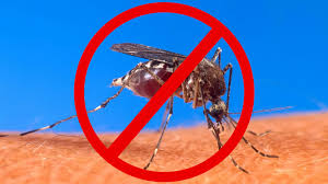 Keep Mosquitoes Away... Without Bug Repellent! - YouTube 15 Backyard Tiki Torches Torches Citronella Oil And How To Get Rid Of Mosquitoes Mosquito Magnet The Best Ways To Of Naturally Beat The Bite Backyard Mosquitoes Research 6 Plants Keep Bugs Away Living Spaces Creepy 10 Herbs That Repel Bug Zapper Plant Lemongrass As A Natural Way Keep Away Pure 29 Best Images On Pinterest Weird Yet Effective Pest Hacks Thermacell Repellent Patio Lanternmr9w Home Depot 7 Easy Mquitos Dc Squad