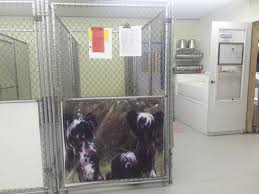 Tile Center Augusta Ga Hours by Daycare Grooming Boarding Training Graced Kennel U0026 Grooming