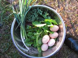Cold Hardy Crops for the Fall & Winter Ve able Garden Family