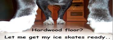 why do dogs slip on hardwood floors why do dogs