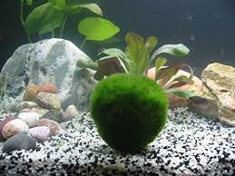 Spongebob Aquarium Decor Amazon by 25 Best Fish Tank Decorations Images On Pinterest Fish Tanks