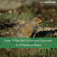 How To Get Rid Of Ground Squirrels In 3 Practical Steps (Dec, 2017) More 25 Marauder Groundhogs And Predator Action Airguns Guns Best Baby Groundhog Ideas On Pinterest What Is A Its Like To Plant Backyard Vineyard Wine Enthusiast Magazine Groundhog Day Walks The Backyard Youtube April 2013 Christfaithpower Mdwildlife Ungardened Moments A Wombat In Our Search Results The Smell Of Molten Projects How Do You Keep Groundhogs Out Of Garden Home Outdoor Decoration Tree River June Glassblowerinfo Animals Holland Bucks County Theyre Back Wildlife Removal Joplin Neosho Carthage Mo