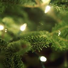 Krinner Christmas Tree Stand Canada by Get To Know Your Christmas Tree Tips For Real Christmas Tree Lovers