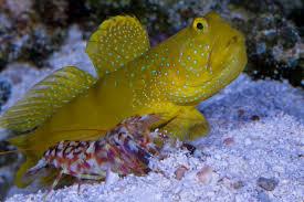 Uv Sterilizer Cabinet Singapore by Fresh N Marine No 1 Choice Online Aquarium Shop