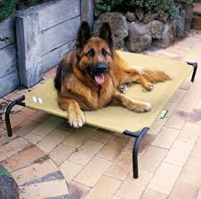 Coolaroo Dog Bed Large by Frisco Steel Framed Elevated Pet Bed Brown Large Chewy For