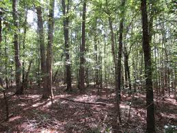 Land For Sale In Georgia, Land For Sale In Alabama - TrueSouth ... Alachua Countys Best Birding Sites Ithaca Trails Park Missouri State Parks 9 Acre Building Lot Bordering Land Near Ny Landquest Forest Walk In The Dupont Waterfalls Tour Hike Cabin And Yellow Barn Cayuga Trail Roy H Preserve Finger Lakes Trust Hammond Hill Go Hiking Ramapo Mountain Njurbanforestcom