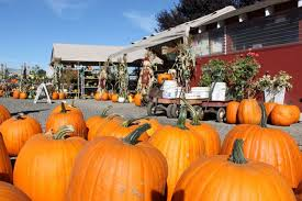 Pittsburgh Area Pumpkin Patches by 13 Charming Pumpkin Patches In Washington