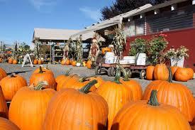Pumpkin Patch Columbus Ga by 13 Charming Pumpkin Patches In Washington