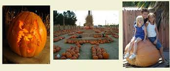 Pumpkin Patch Power Rd Mesa Az by I Heart Mesa Pumpkin Festivals