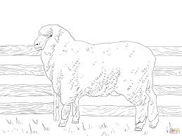 Lamb Coloring Page Free Printable Pages Site