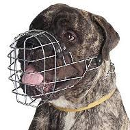 non shedding dogs low shedding dogs the best dog muzzles