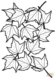 Autumn Maple Leaves Coloring Page Free Printable Pages And Fall